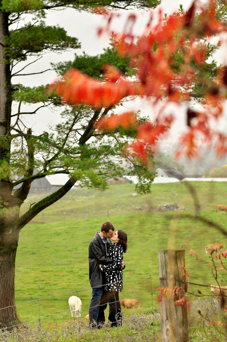 Couple kisses under lone tree on farm with red sumac, cows, and barn