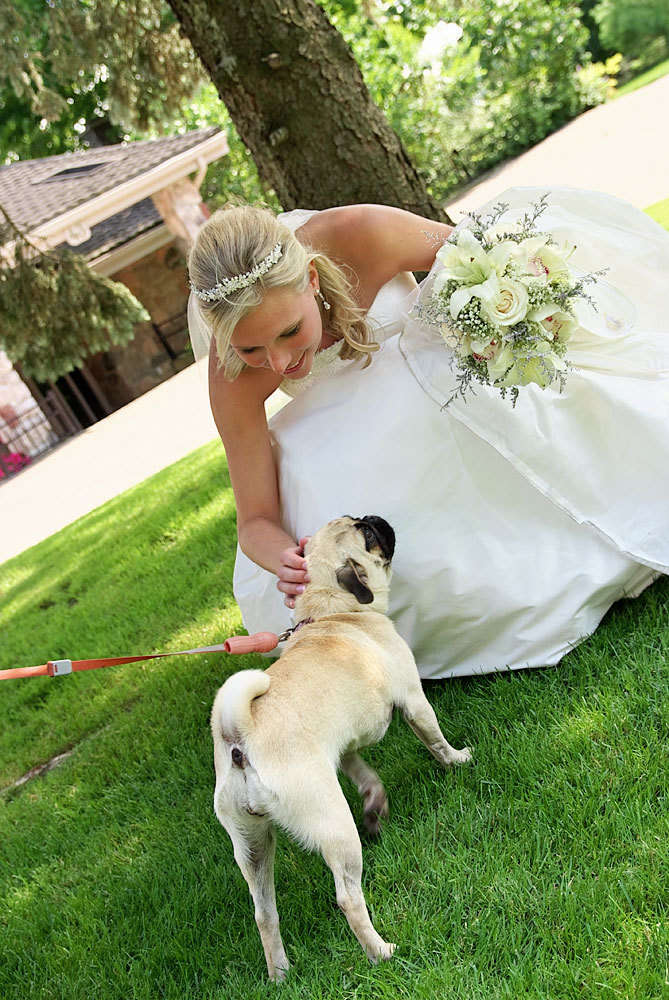 barrie wedding photographer bride pets cute dog