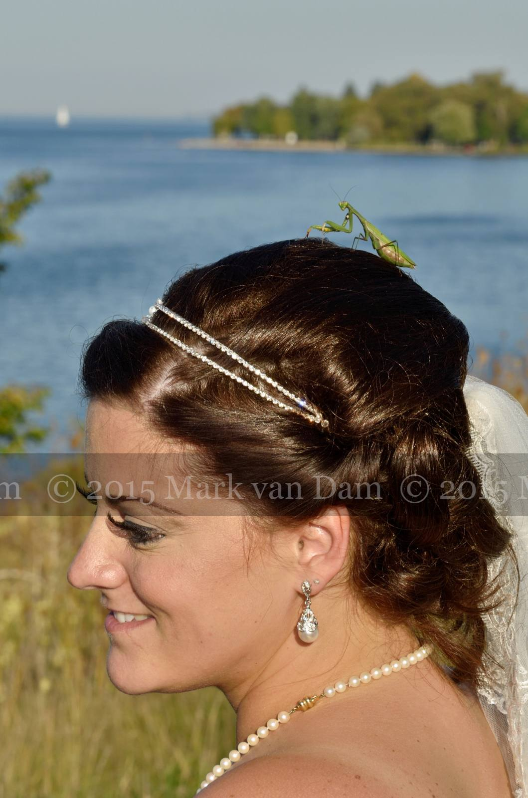 praying mantis lands on bride's head