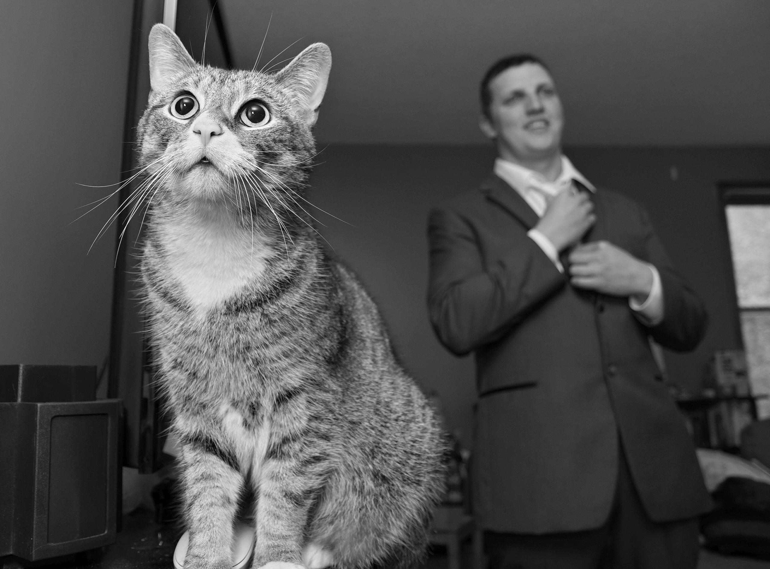 curious cat looks on as groom ties his tie